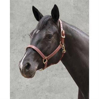 Dover Pro Leather Halter