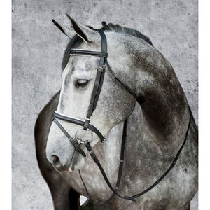 Suffolk Black/White Dressage Bridle