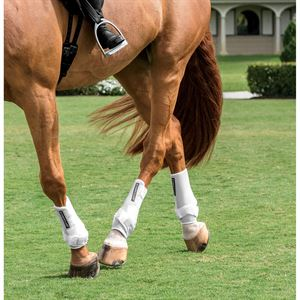 ICONOCLAST HIND ORTHOPEDIC BT