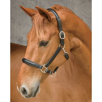 Circuit Plain Raised Padded Halter