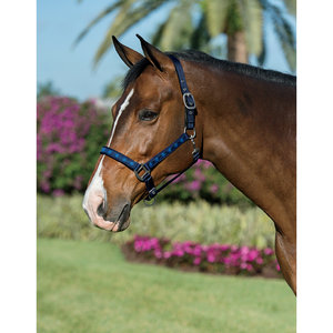 SOLID NOSE ROPE HALTER