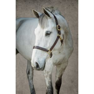 Dover Pro Fancy-Stitched Padded Halter
