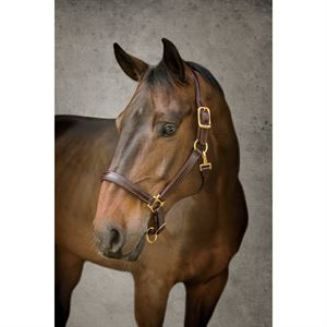 Dover Pro Padded Leather Halter