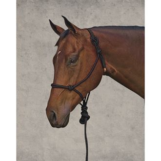 3/8-Inch Rope Halter with Lead