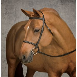 SUFFOLK RAISED BRIDLE-PONY