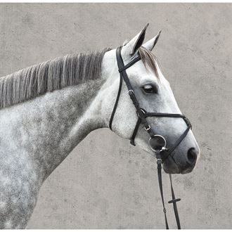 Vespucci Raised Figure 8 Bridle