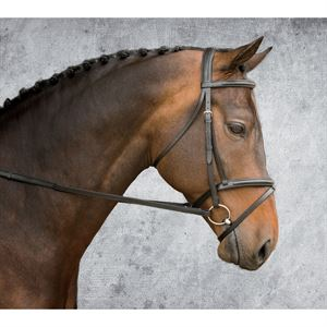Warendorf Everyday Bridle