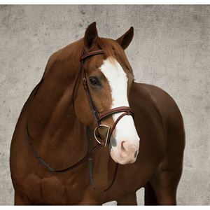 SHOWMARK PADDED FLASH BRIDLE
