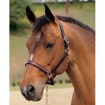 Middleburg Brown Leather Halter