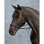 Crown Clincher Bridle