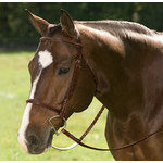 Circuit Raised Bridle