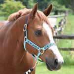 Perris Ribbon Trim Halter