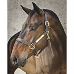 Circuit Padded Leather Halter