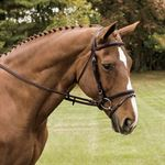 Vespucci Fancy Stitched Raised Flash Bridle