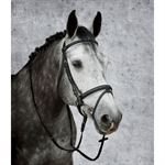 SFFLK PADDED DRESSAGE BRIDLE