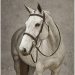 HDR Pro Stress Free Fancy-Stitched Padded Bridle
