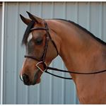 Ovation® Arabian Fancy Raised Padded Bridle