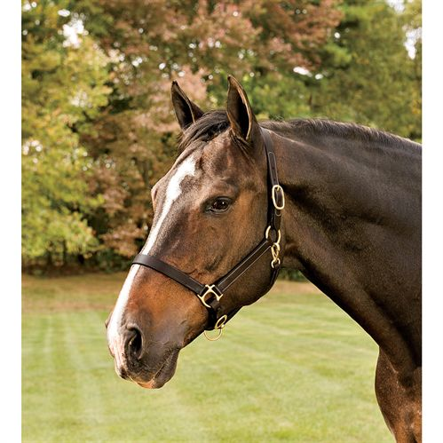 Suffolk Stable And Turnout Leather Halter