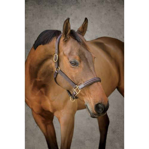 Circuit Double Raised  Padded Halter