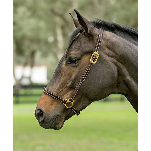 Dover Pro Leather Grooming Halter