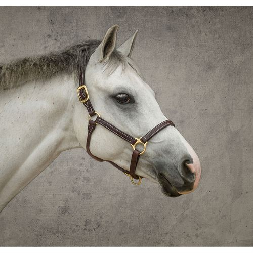 Dover Pro Leather Pony Halter
