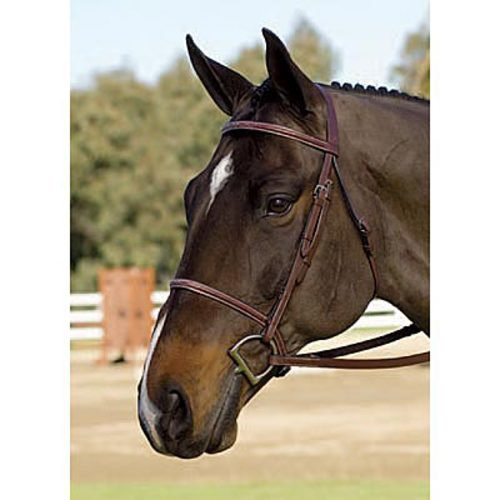 Collegiate Fancy Raised Bridle