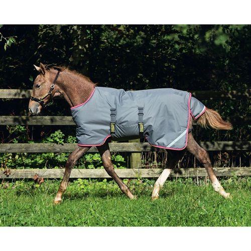 Amigo Foal Turnout